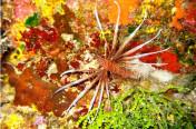 Snorkeling on Cozumel's best reefs